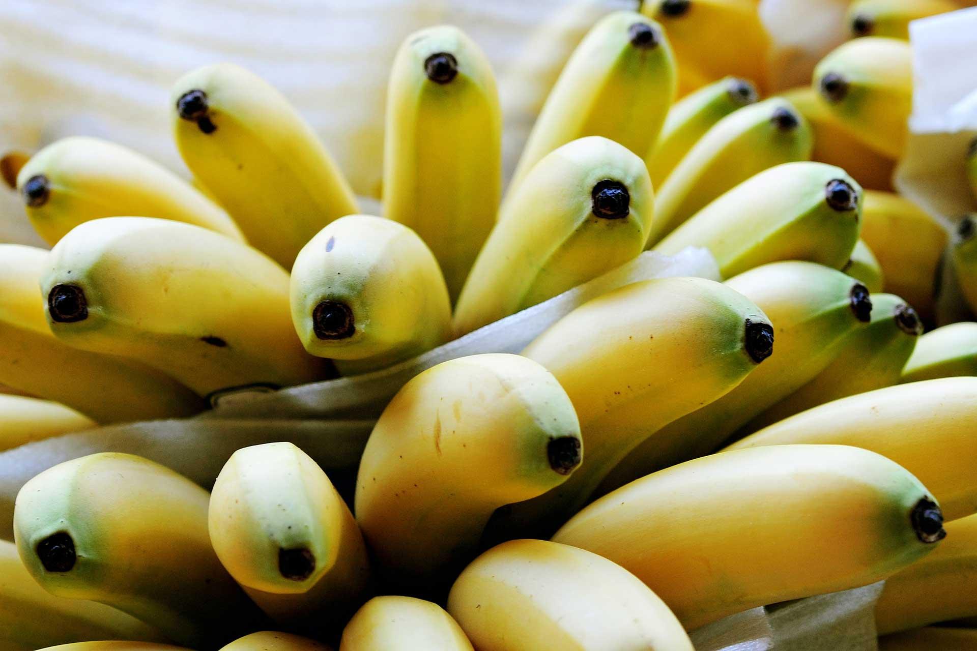 Lexington Kentucky Trademark Bananas